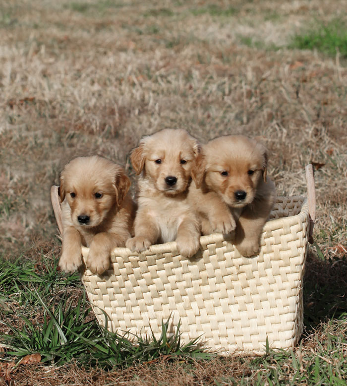 pups-cropped