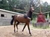 aradon-horses