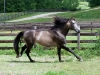 lusitano-horses-14