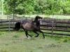 lusitano-horses-15