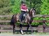 lusitano-horses-18
