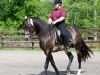 lusitano-horses-19