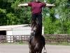 lusitano-horses-20