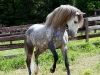 lusitano-horses-4