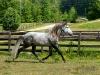 lusitano-horses-7