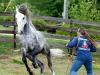 lusitano-horses-8