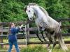 lusitano-horses-9