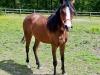 pony-3