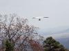 hang-glider-25