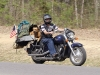 mototcycle-riding-dog-8