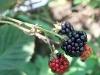 blackberrys2