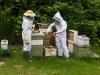 thomas-bees-15