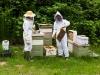 thomas-bees-16