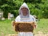 thomas-bees-17