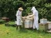 thomas-bees-19