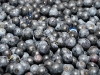 wadsworth-farms-blueberries6