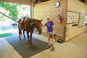 red-barn-st-clair-hippotherapy-2