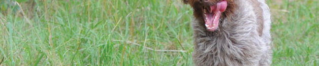 teddy-the-wonder-dog-teaser