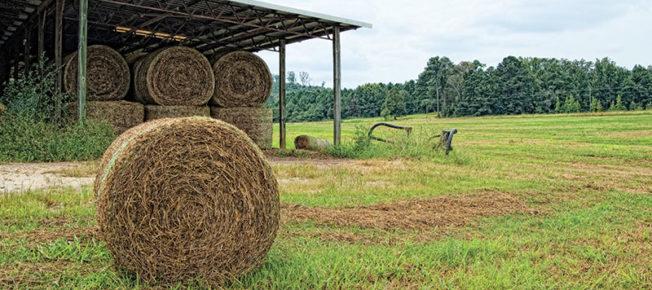 faulkner-farm-teaser